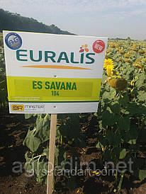 Соняшник ЕС Савана від Євраліс