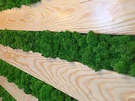Мох ягель от walldecor, цвет Grass Green