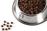Преимущества питания собак сухим кормом