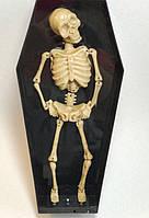 Оригинальный Сувенир Танцующий Скелет в Гробу на Батарейках Прикол для Вечеринки
