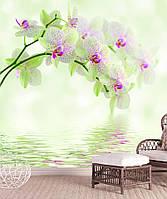 """3D фотообои """"Орхидеи и отражение"""""""