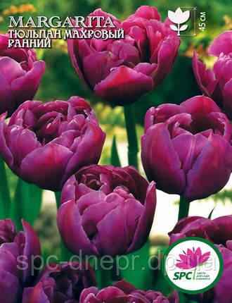 Тюльпан махровый ранний Margarita