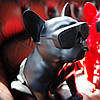 Акустика Jarre AeroBull XS1, портативная bluetooth колонка собака, колонка в виде собаки, колонку бульдог