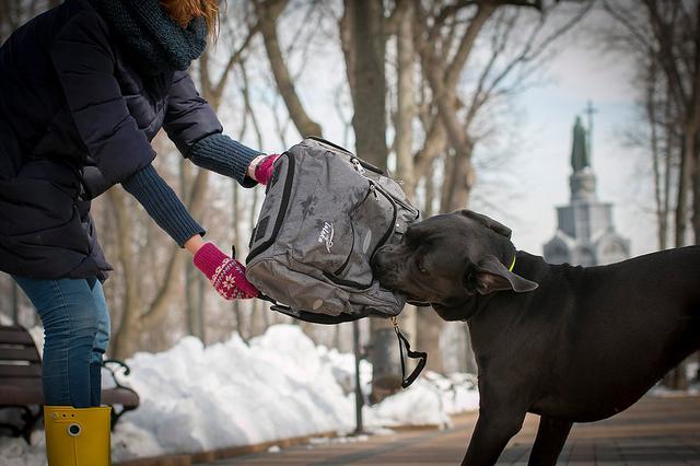собака грызет сумку