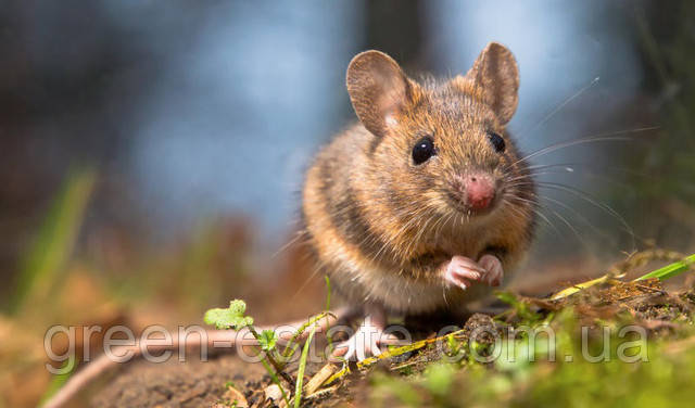 средства от мышей