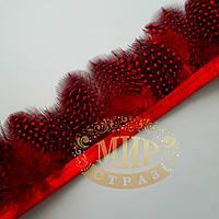 Тесьма перьевая из пера цесарки, цвет Siam,  0,5м, высота 5,5 см