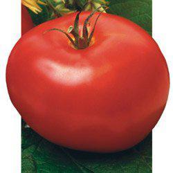 Насіння томату Андромеда F1 (5 г) Елітний Ряд