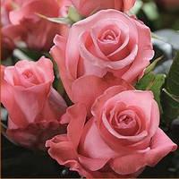 """Роза чайно-гибридная """"Ленни"""", фото 1"""