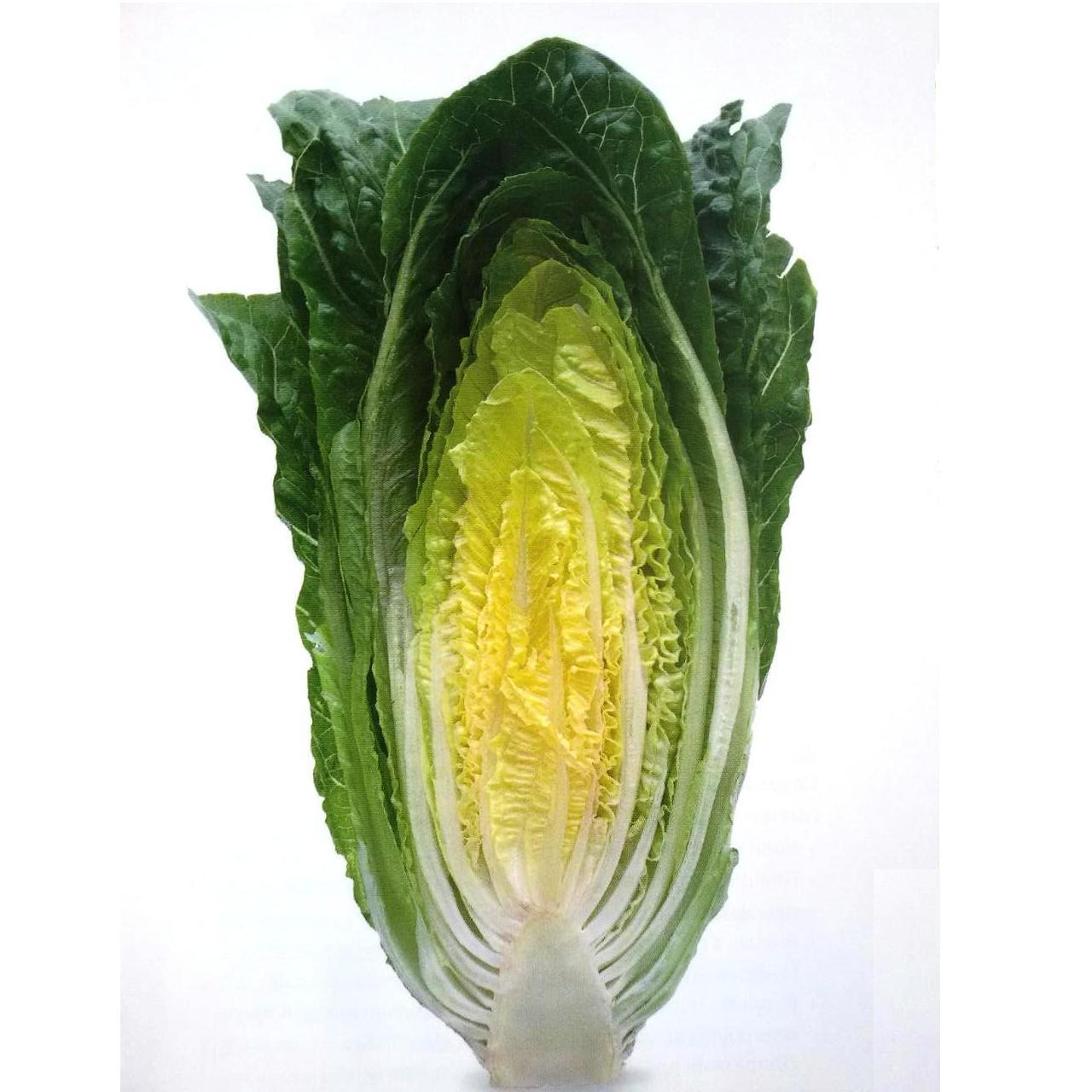 Семена салата Квинтус (50 драже)