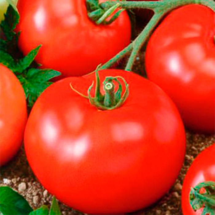 Семена томата Прима-люкс F1 (5 г)