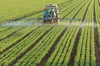 Гербіциди – надійний захист посівів від бур'янів