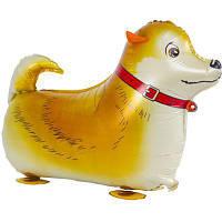 """Фольгированные шары ходячие """"Собака рыжая"""""""
