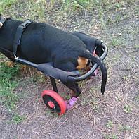 Ботиночки для собак - Арт.