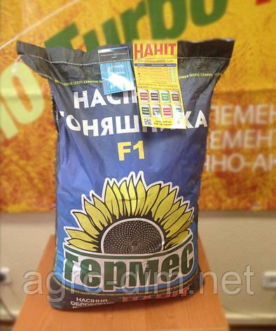 "Семена подсолнуха Гермес ""МЕРКУРИЙ ОР6+"", фото 2"