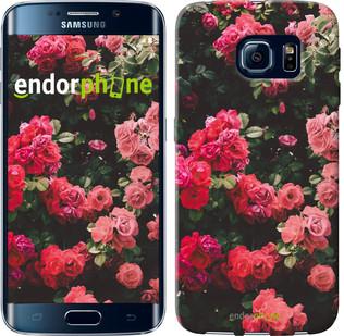 Чехол на Samsung Galaxy S6 Edge G925F Куст с розами