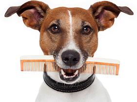 Расчески и пуходёрки для собак
