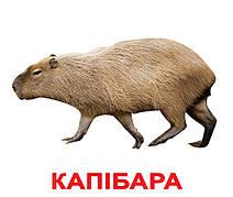"""Карточки большие украинские с фактами """"Екзотичні тварини"""" 20 карт., методика Глена Домана, в пак. 16,5*19,5см, ТМ Вундеркинд"""