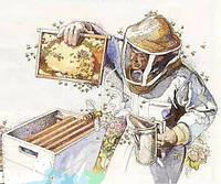 Принимаем заявки на пчелопакеты Карпатка