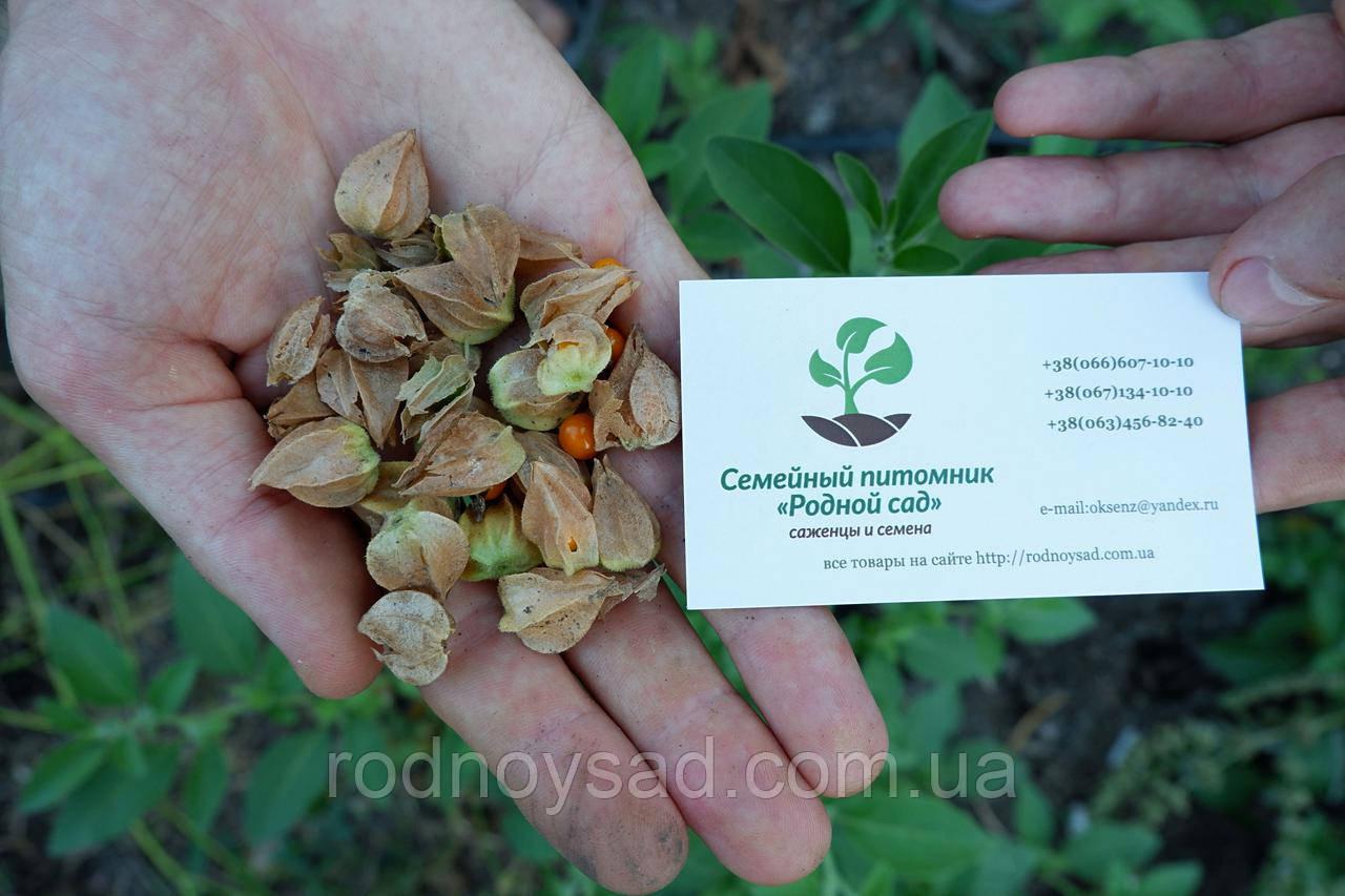 Ашвагандха семена (10 штук) (ашваганда, индийский женьшень) ценное лекарственное растение