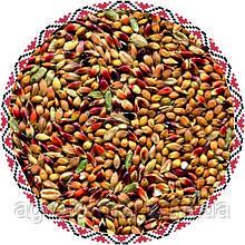 Семена суданка Мироновская
