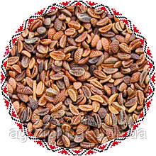 Семена Фацелии от 1 кг