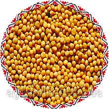 Семена Горчица Жёлтая
