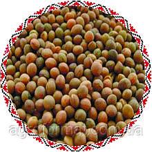 Семена Вика Ярова