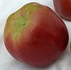 Яблоня Джумбо Помм. (М.9). Зимний сорт.