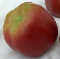 Яблоня Джумбо Помм. (М.9). Зимний сорт.  , фото 1
