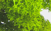 Стабилизированный мох. FAQ