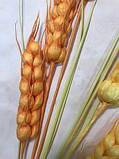 Искусственная пшеница.Декоративные пшеничные колосья., фото 3