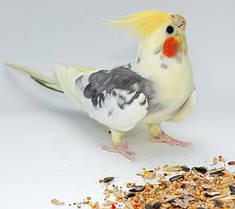 Корм для попугаев и декоративных птиц
