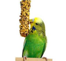 Лакомства для попугаев и декоративных птиц