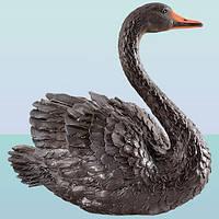 Лебедь черный