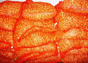 Цибуля озима димка (тиканка)