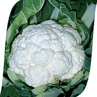 Семена цветной капусты Фридом F1 (2500 сем.)