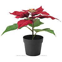 """ФЕЙКА Искусственное растение в горшке, """"Рождественская звезда"""" красный, 50320966, ИКЕА IKEA, FEJKA"""