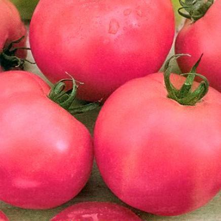 Насіння томату Ляна рожева (5 г) Елітний Ряд