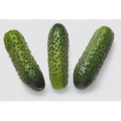 Семена огурца Соната F1 (50 г)