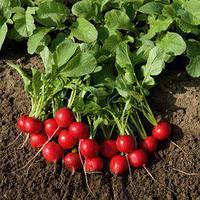 Семена редиса Рудольф (500 г)
