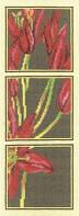 Набор для вышивки крестом RTO M281 «Королевская лилия»