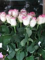 """Роза """"Дольче Вита"""""""