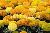 Чорнобривці Діскавері F1 (колір на вибір) 100 шт., фото 1