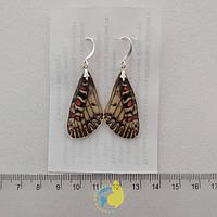 Копия Серьги из крыла бабочки Zerynthia polyxena