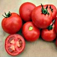 Валдай (4195) F1 - томат полудетерминантный, 500 семян, Nunhems (Нунемс) Голландия