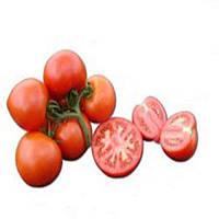 Аксиома F1 - томат индетерминантный, 500 семян, Nunhems (Нунемс) Голландия