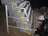 Клетки для перепелов на 636шт. 6этажные., фото 2