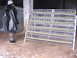 Клетки для перепелов на 636шт. 6этажные., фото 3