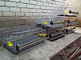 Клетки для перепелов на 636шт. 6этажные., фото 6