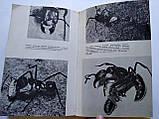 В. Халифман Джмелі і терміти, фото 5